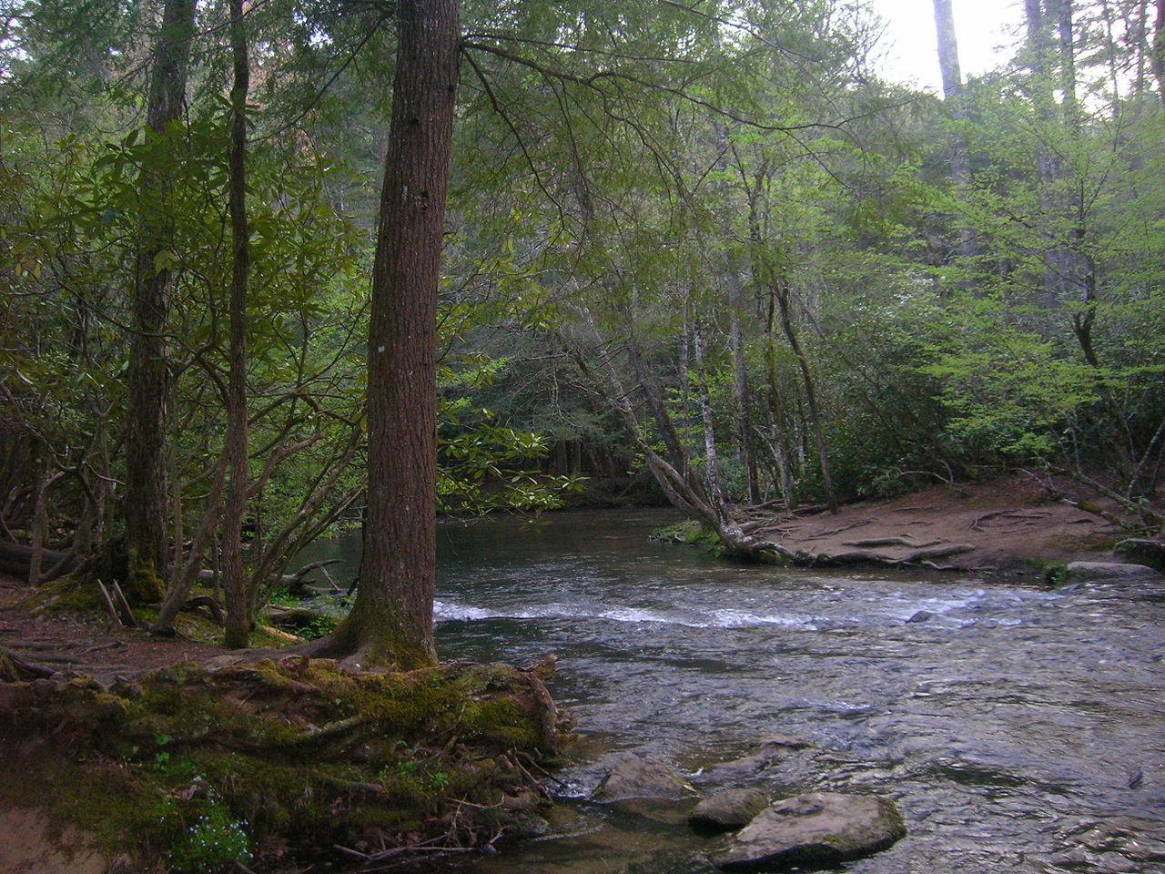 Abrams Creek Near Trailhead