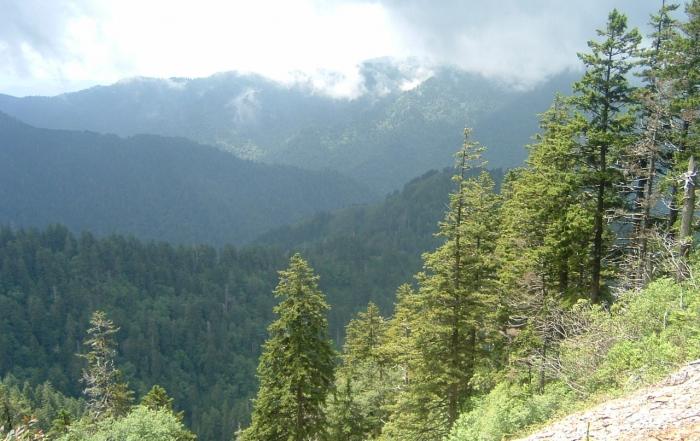 Alium Cave Bluff Trail Overlook