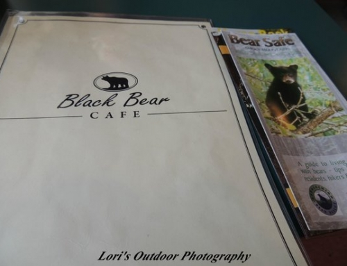 Black Bear Cafe