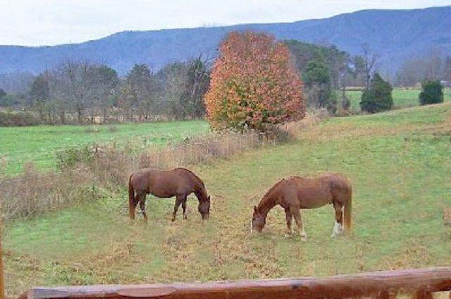 golden memories horses